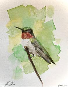 Ruby Throated Hummingbird SOLD