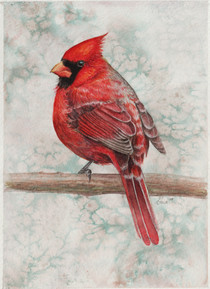 Northern Cardinal SOLD *Prints Available