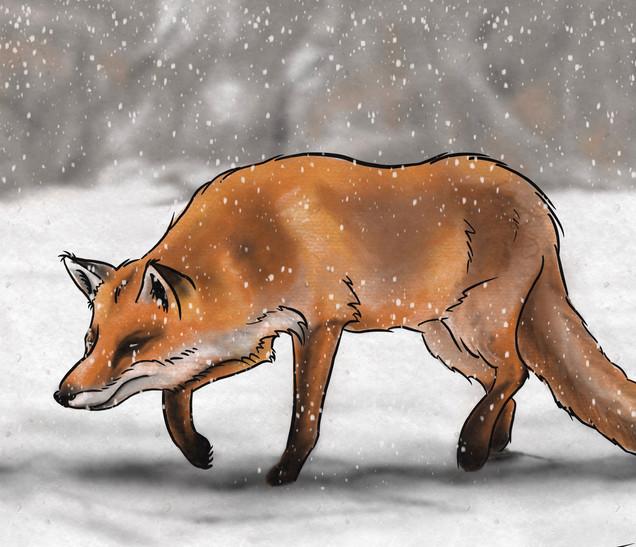 Joseph Grice Red Fox Digital Illustration