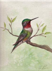 "Ruby Throated Hummingbird 8x10"" SOLD"