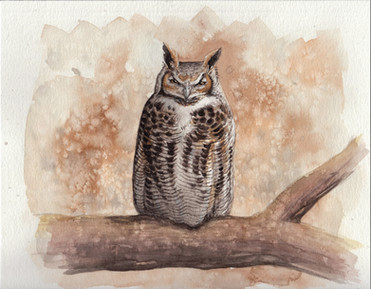 """Great Horned Owl 8x10"""" $200 *Prints Available"""
