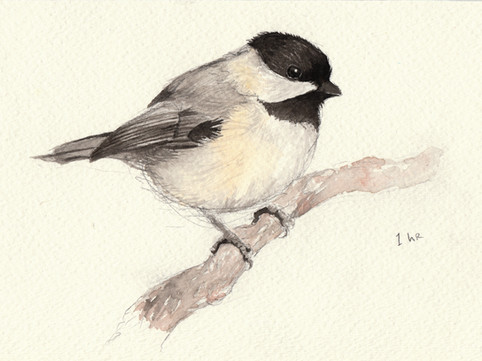 Black Capped Chickadee SOLD