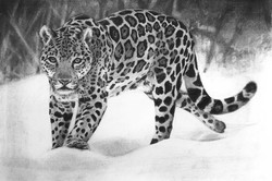 Jaguar edit1