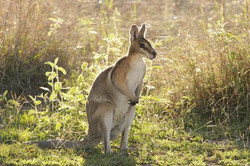 Serafini Mind Spa wallaby