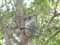 Serafini Mind Spa Koala