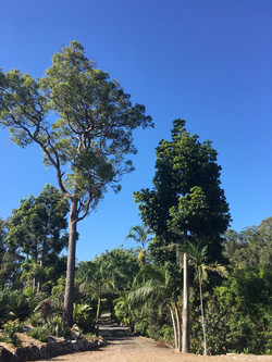 Noosa Forest