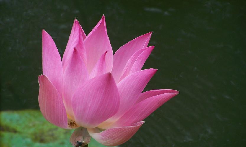 Serafini Mind Spa lotus