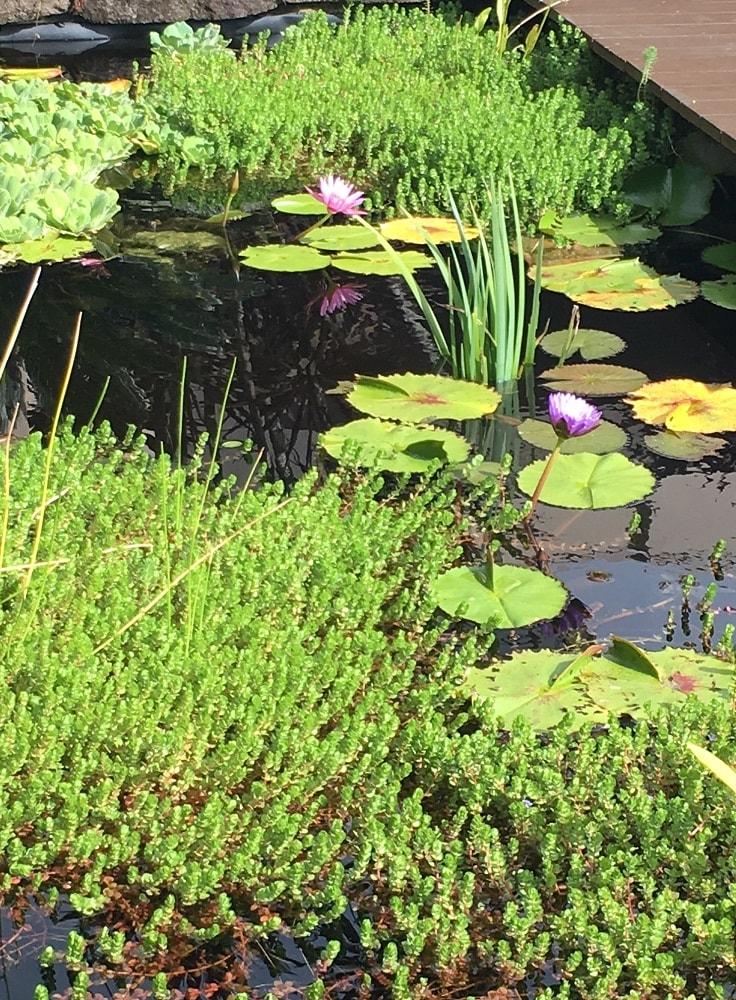 Serafini Mind Spa peaceful pond