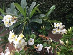 Serafini Mind Spa Noosa Flowers