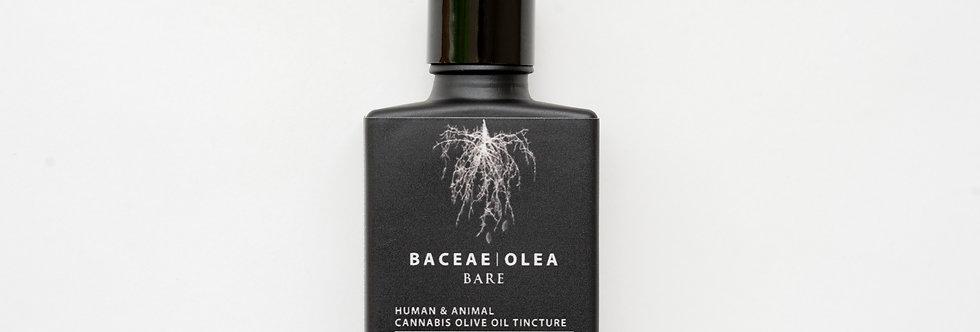 Baceae Olea - Bare