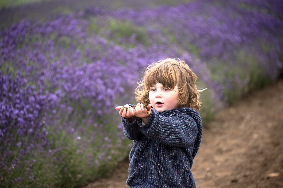 lavender-98_edited.jpg