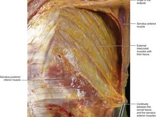 🔑Fascia, Biotencegrity 21st Century Anatomy 🔑