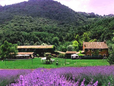 Campi di Lavanda, eccone alcuni in Lombardia