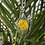 Thumbnail: Pressed Flower Necklaces