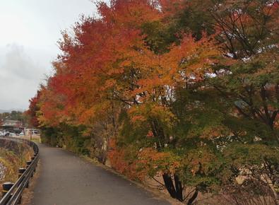 autumn, otoño, paisajeotoñal, colores en arboles, hojas de color