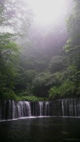 forest, phtoofnature, bosque, verano