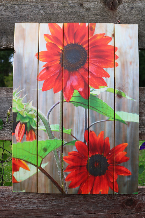 0016- Red Sunflowers Against Fence