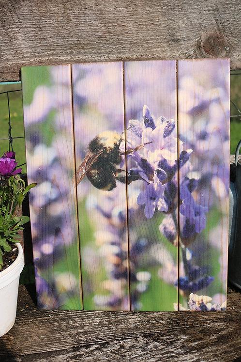 0087- Bumblebee on Lavender