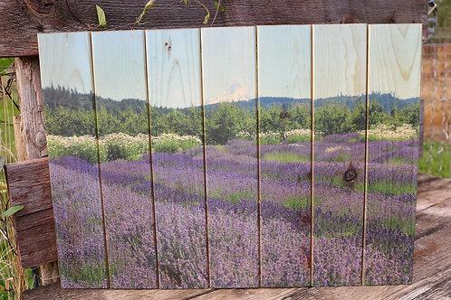 0019- Lavender Rows
