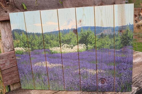 0020- Lavender - purple and white