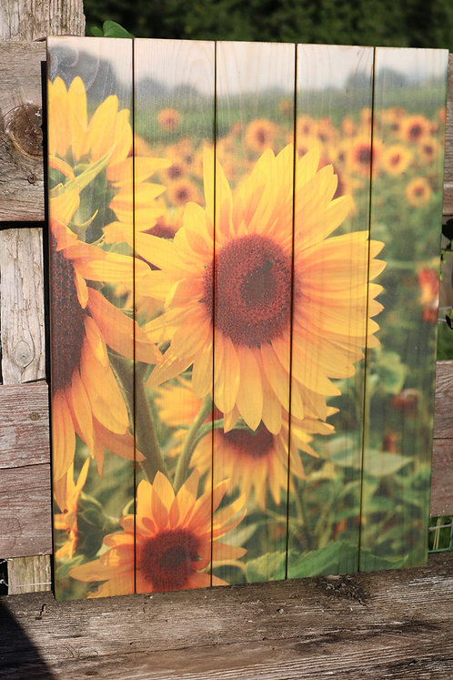 0056- Sunflower with Field of Flowers