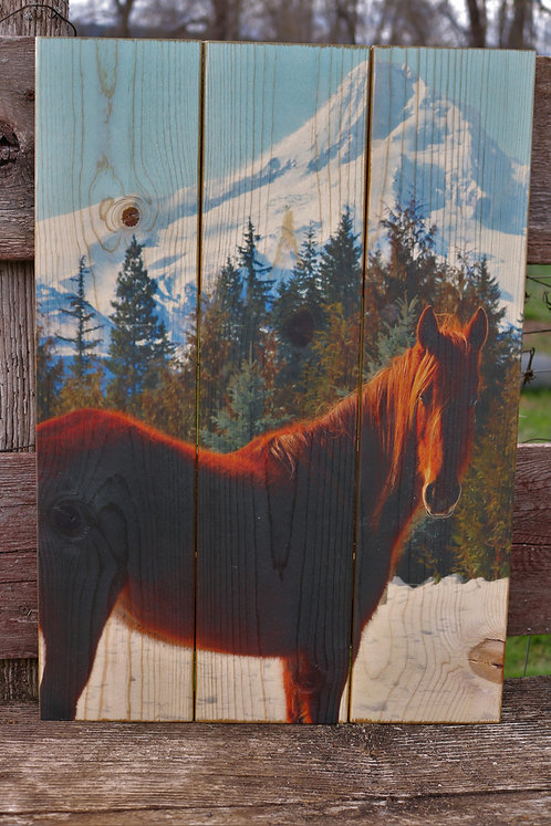 0073- Mare and Mt. Hood