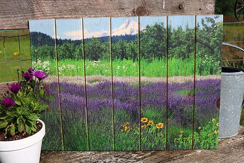 0030 - Hood River Lavender