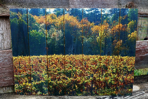 0034- Viento Vineyard in the Fall