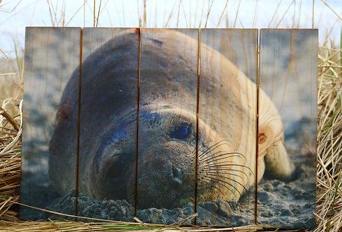 0110 - Harbor Seal