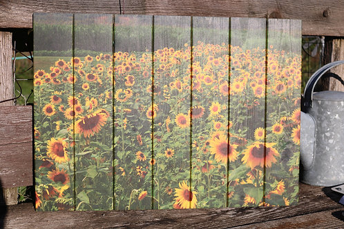 0017- Sunflower Field with Corn