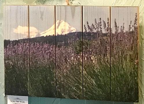 0101- Lavender Closeup, Mt Hood