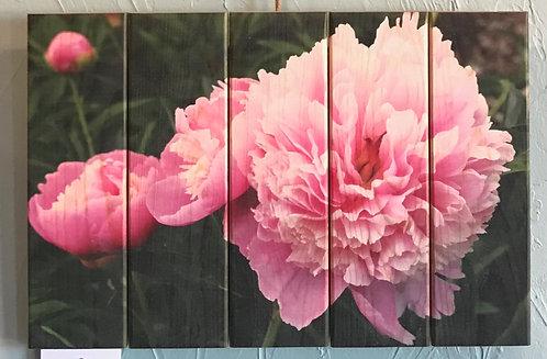 0105- Pink Peonies