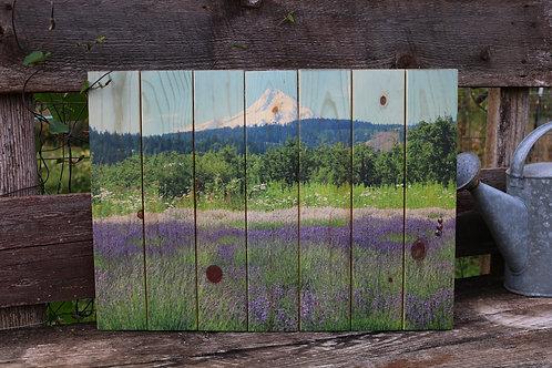 0030- Lavender - Ornamental Garden