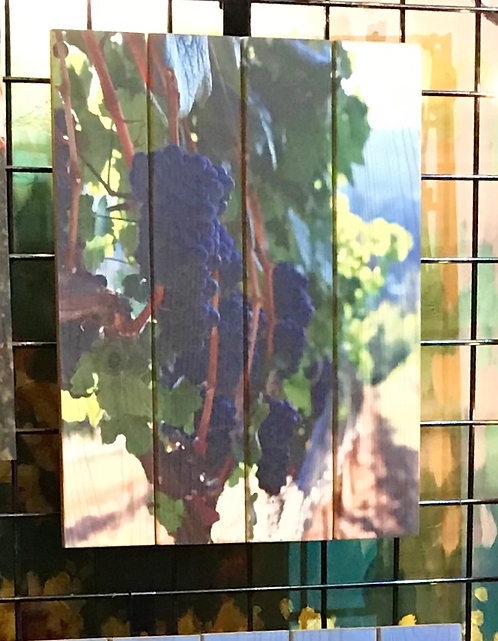 0053- Grapes on the Vine - View of Row