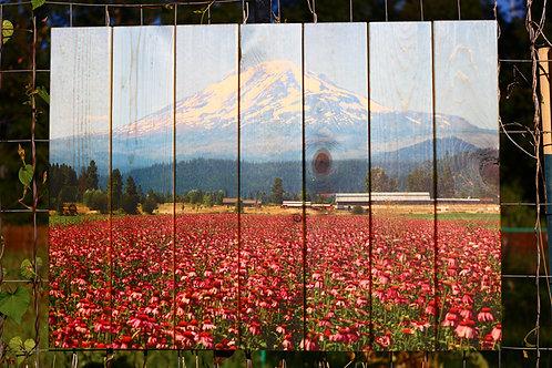 0049- Echinacea Farm Mount Adams