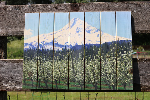 0077- Spring Blossoms & Mt Hood