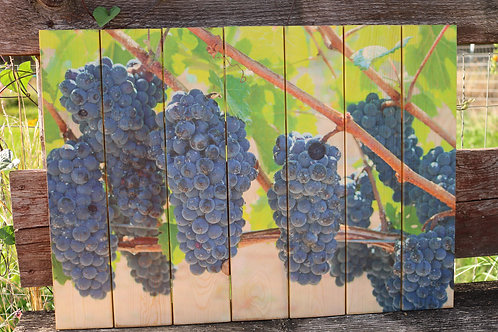 0045- Grape Clusters on the Vine