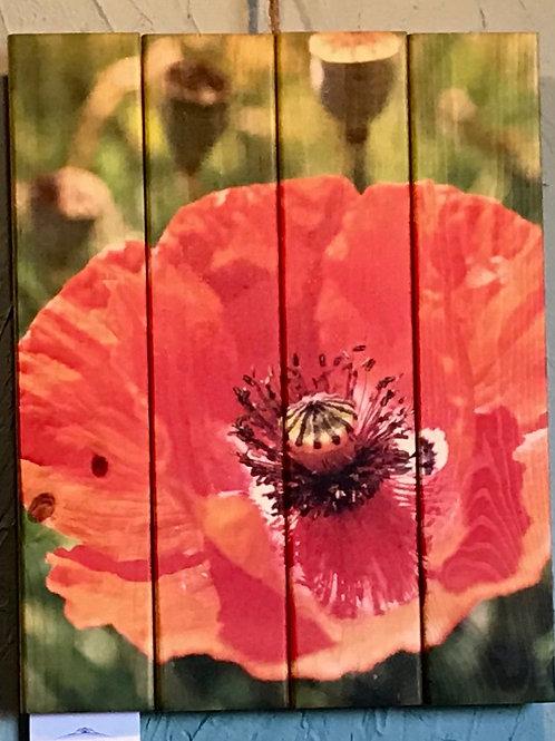 0106- Red Poppy