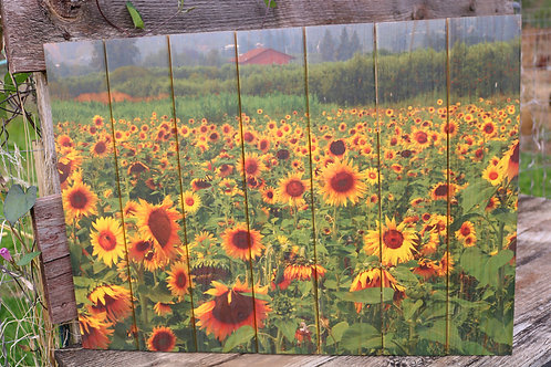 0063- Sunflower Field with Red Roof