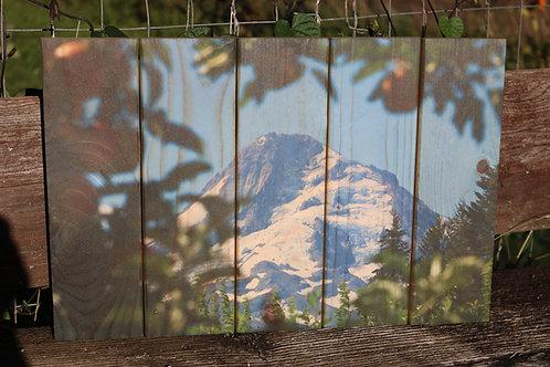 0097- Mt Hood Framed by Apple Tree