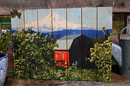 0092- Red Barn in White Blossoms & Mt Hood