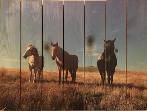 0002- Three Horses