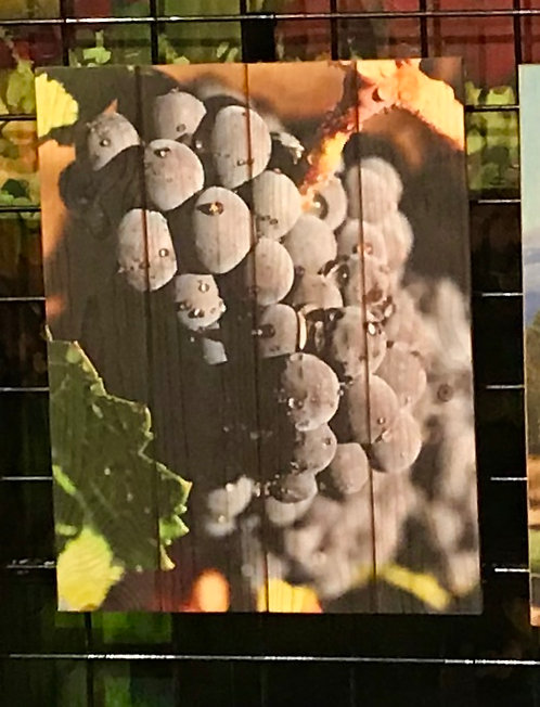 0055- Grapes and Vine with Dew