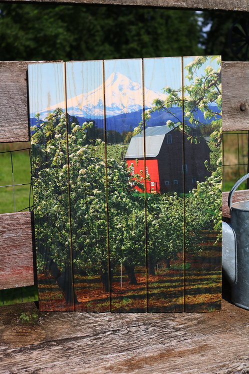 0080- Red Barn in Blossoms & Mt Hood