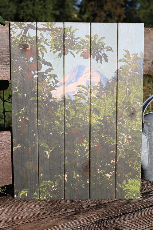 0011- Mt Hood Framed by Apple Trees