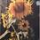 Thumbnail: 0003- Tall Sunflower