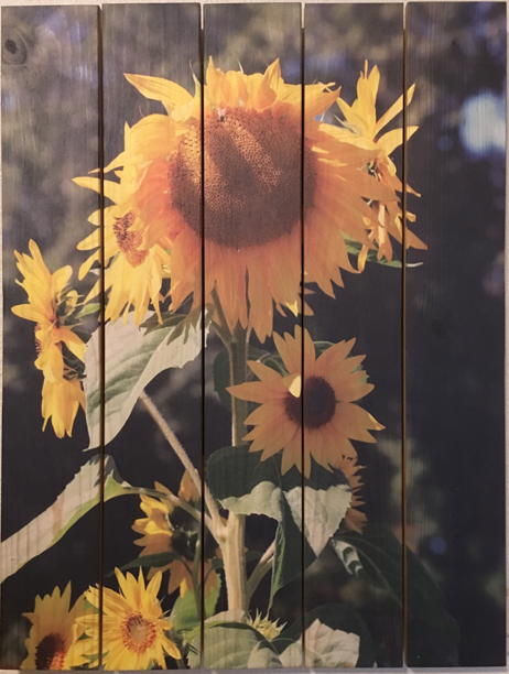 0003- Tall Sunflower
