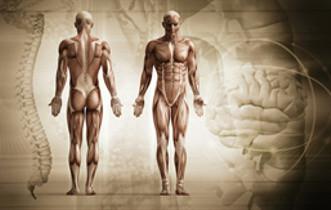 La Posture: un pré-requis pour le mouvement ?