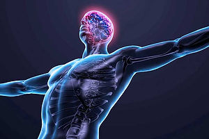 connexion-muscle-cerveau-musculation.jpg
