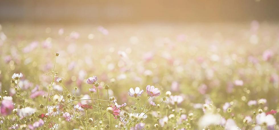 Field of Flowers.webp